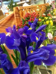 iris fioreria sarmeola
