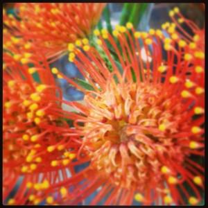 Fiore Nutan arancione