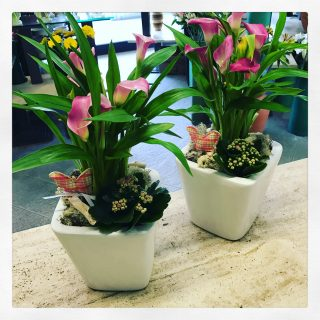 Composizioni di piante in vaso con calle rosa e calanchoe