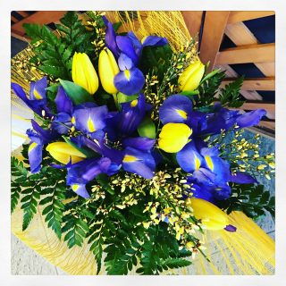 Il fiore di oggi iris e il significato del fiore for Composizione del parlamento italiano oggi