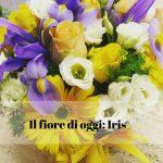 Il fiore di oggi: Iris