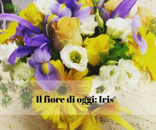 Il fiore di oggi l'Iris
