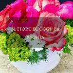 Il fiore di oggi: la peonia