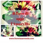 Il fiore di oggi: l'Amaryllis