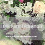 Il fiore di oggi: l'alstroemeria
