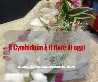 Il Cymbidium è il fiore di oggi