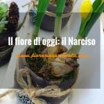 Il Narciso e il suo significato