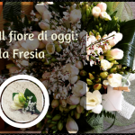 Il fiore di oggi: la Fresia