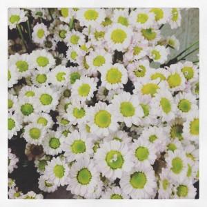 Sancarlini, una delle tante varietà di fiore