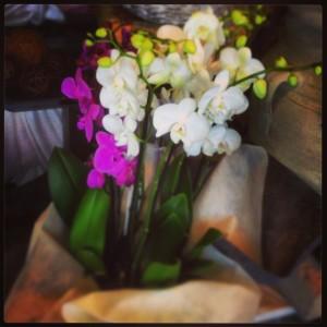 La pianta di oggi orchidea phalaenopsis for Vaso orchidea