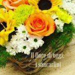 Il fiore di oggi: i sancarlini