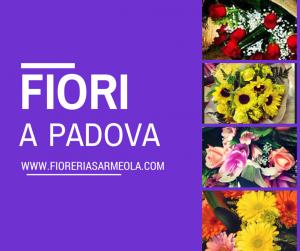 fiori e piante online Padova