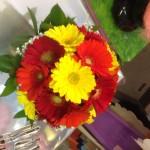 Il fiore di oggi: la Gerbera