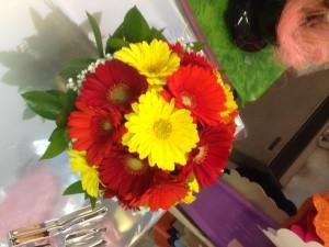 gerbere fiore