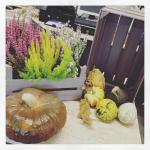 fiori e zucche