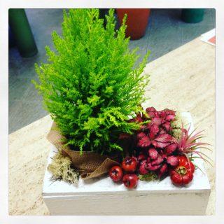 composizione piante per decorare la casa a Natale