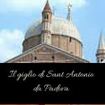Il giglio di Sant Antonio da Padova
