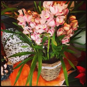 orchidea cymbidium Padova