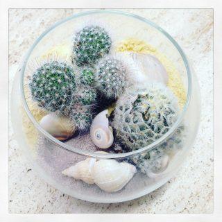 composizione con pianta grassa