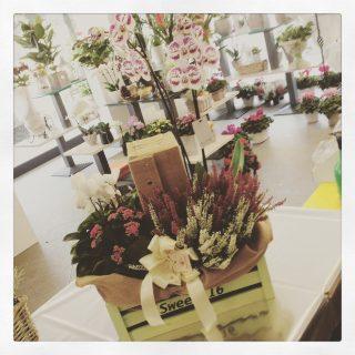 Cassetta di piante con bottiglia di vino per un anniversario di matrimonio