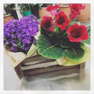 Gloxinia e campanula in una simpaticissima cassetta di legno