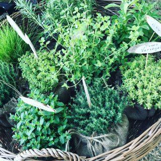 Esposizione piante aromatiche
