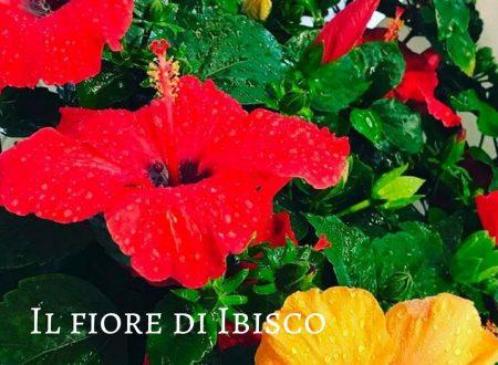 Il fiore di Ibisco