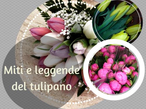 Miti e leggende del tulipano
