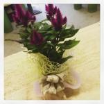 La pianta di oggi: la Celosia