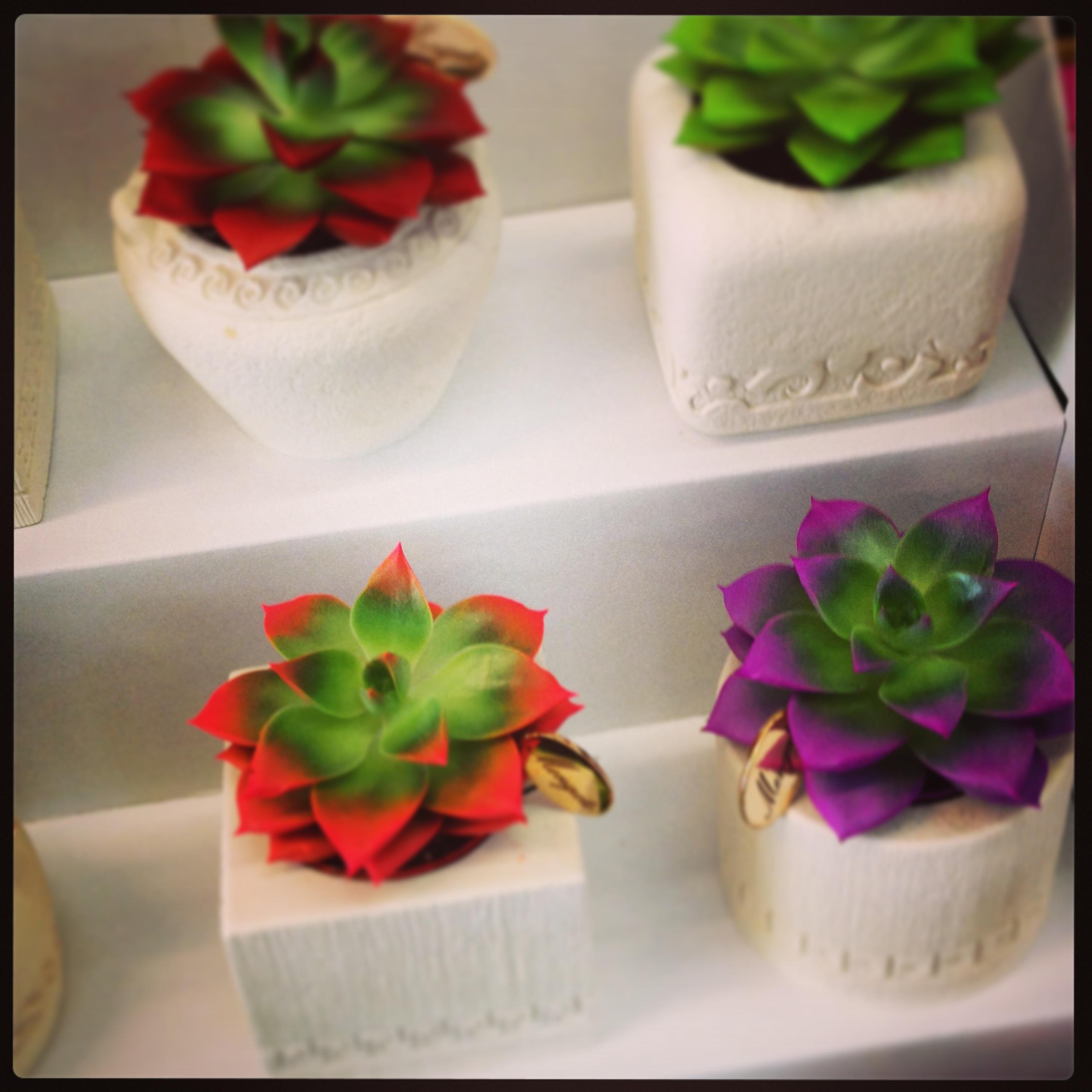 Vasi per piante grasse portfolio archivi lithos color - Piante per ufficio ...