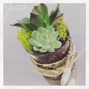 succulente con muschio, vetro e legno