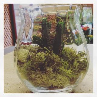 terrarium con succulente