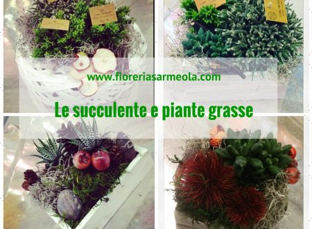 Le succulente e piante grasse