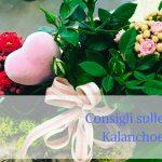 Consigli sulle Kalanchoe
