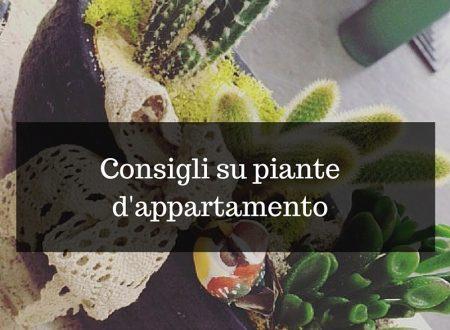 Consigli su piante d'appartamento