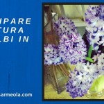 Anticipare fioritura di bulbi in vaso
