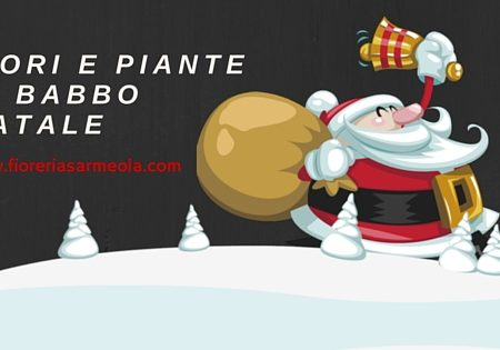 Fiori e Piante di Babbo Natale