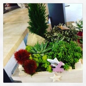 composizione su cassettina il legno con succulente e pino