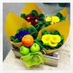 La pianta di oggi: la Primula