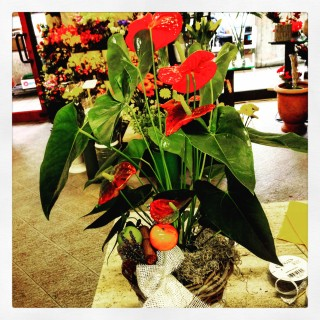 Il significato dei colori il rosso for Anthurium rosso