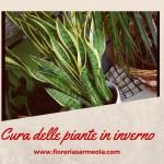 Cura delle piante in inverno