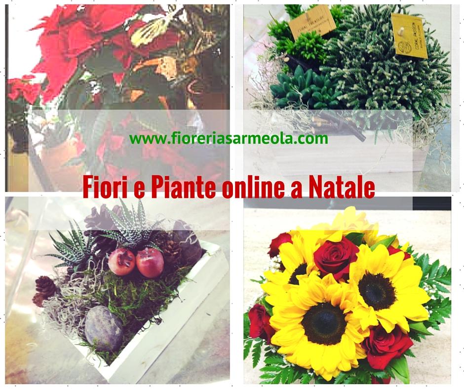 Fiori e piante online a natale for Piante on line