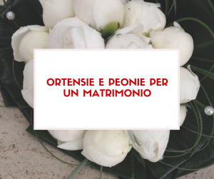 Ortensie e Peonie per un matrimonio