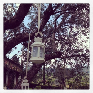 lanterne appese su ulivi in agriturismo