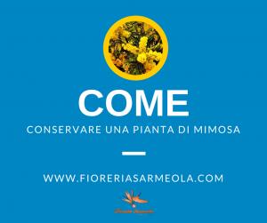 Come conservare una pianta di mimosa