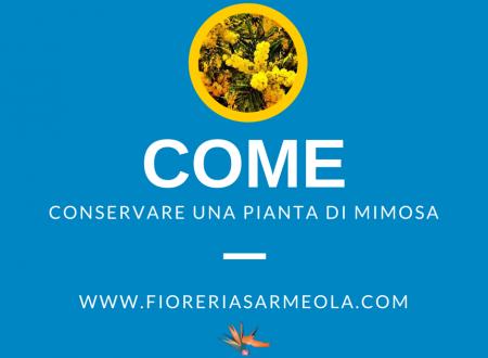 Come conservare la pianta di mimosa
