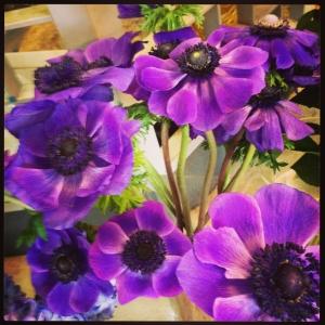 anemoni colorati