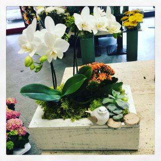 Composizione di piante su cassetta legno