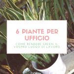 6 piante per il vostro ufficio