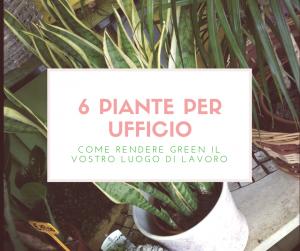 6 piante per ufficio